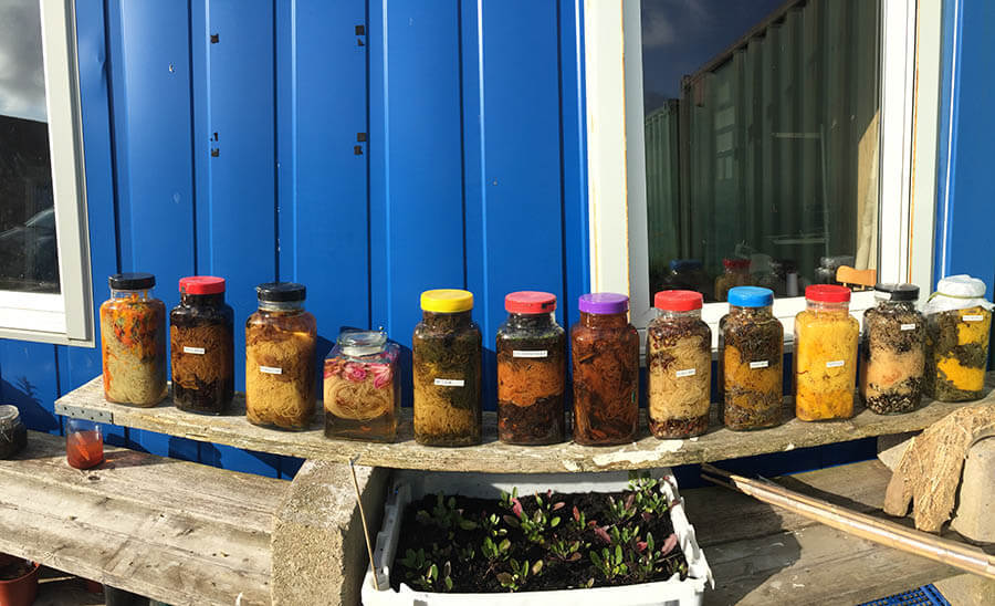 Ardalanish Weavers, Mull, Scotland. Dye jars.