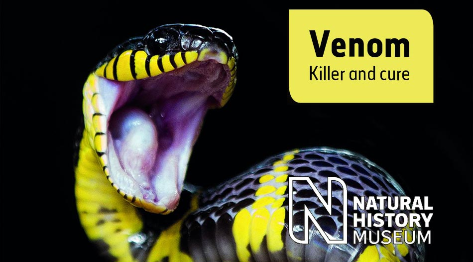 Venom - Killer and Cure Exhibition. Natural History Museum, London.